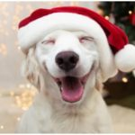 Dog smiling waiting to hear some of those hilarious dog Christmas puns