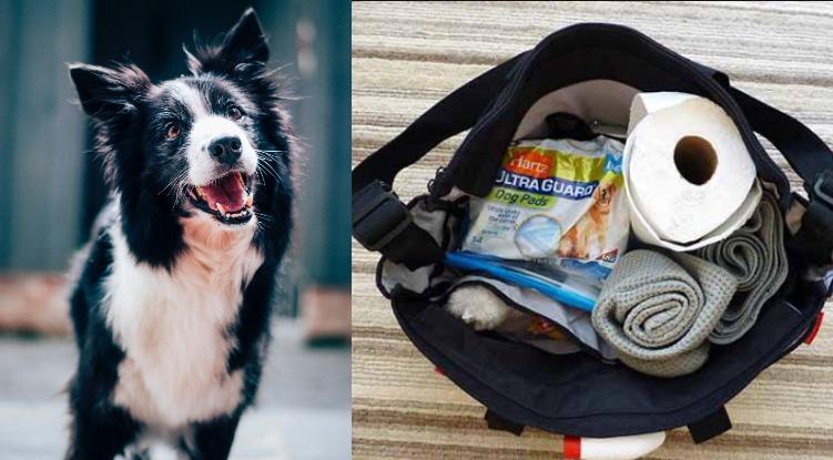 dog diaper bag