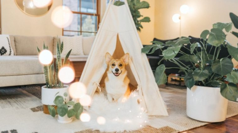dog teepee bed