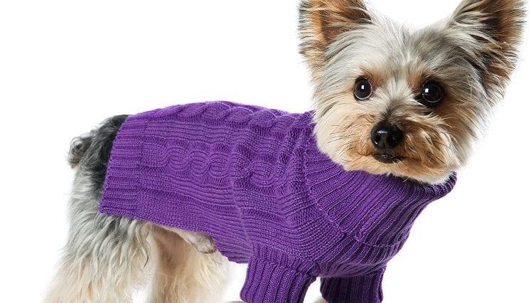 dog wearing dog turtleneck