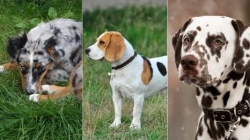 dogs with spots