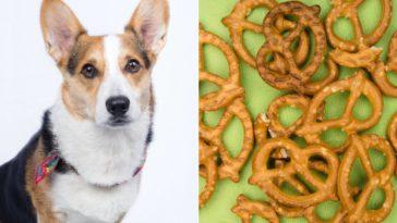can dogs eat pretzels?