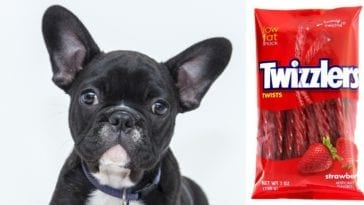 can dogs eat twizzlers