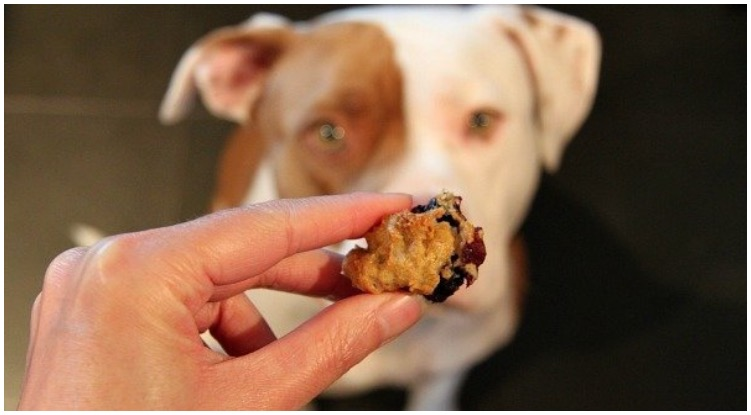 Dog owner questioning can dogs eat blueberry muffins