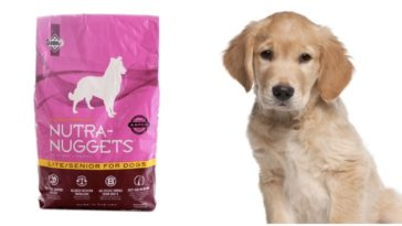 Adorable Golden Retriever Puppy next to a bag of nutra nuggets dog food