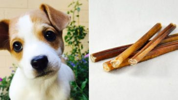 Can puppies have bully sticks