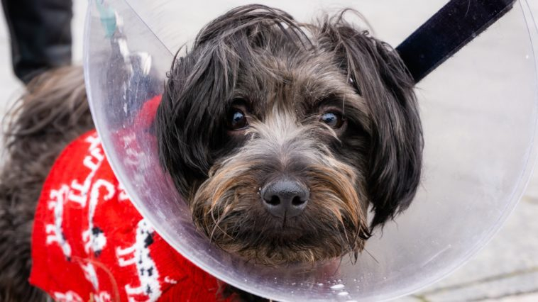 How to make a dog cone