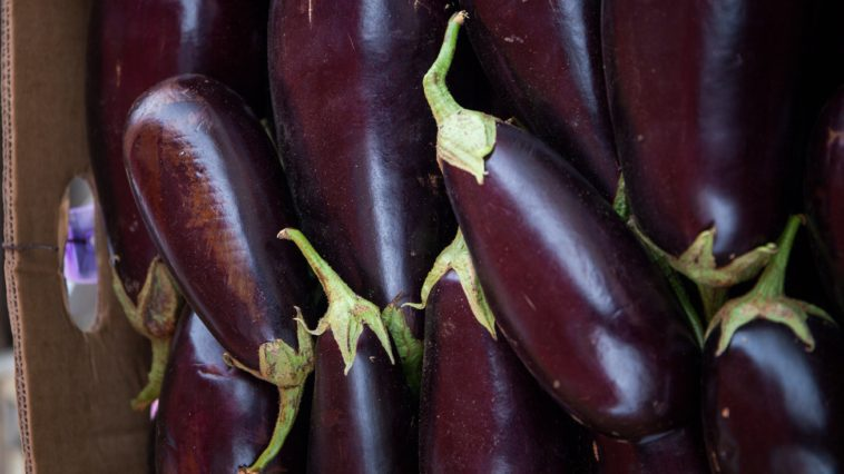can dogs have eggplant