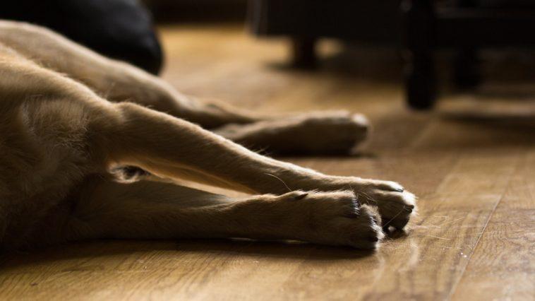 a dog's legs