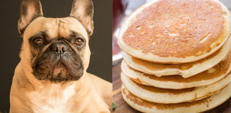 Can dogs eat pancakes