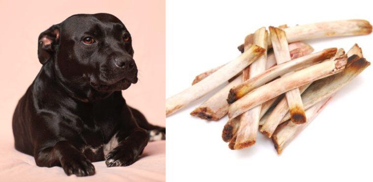 Can dogs eat rib bones
