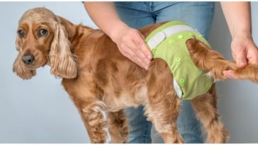 Diapers For Dogs In Heat are made for bitches that bleed during their heat