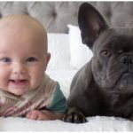 A baby and French Bulldog enjoying their time together