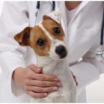 What is the DHPP Vaccine For Dogs and what does it do
