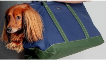 A dog just enjoying his time in a dog purse
