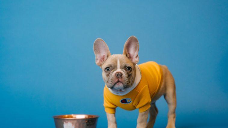 yeti dog bowl stainless steel bowl